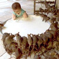 enfant-rats